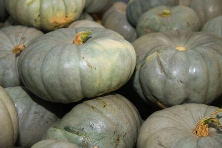 Fresh grey pumpkins as a background. Vegetable store Banque d'images