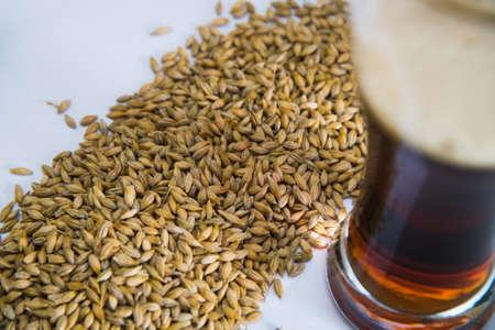 Brewery. Barley grain malt is an ingredient in the production of beer.