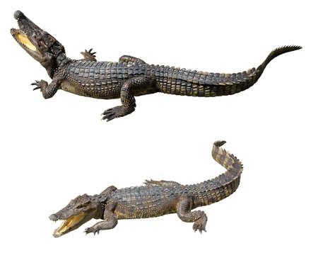 Collection of crocodiles isolated on white