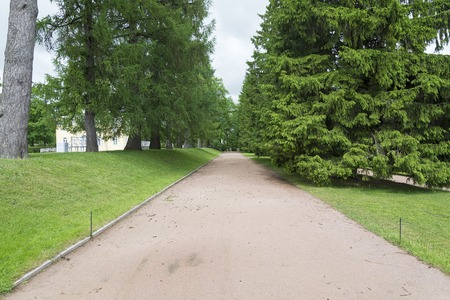 Tsarskoye Selo Pushkin, St. Petersburg, alley in the Park, trees and shrubs, walking paths in the summer Sunny day.