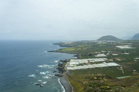 View of the vegetable fields of the island of Tenerife, Agriculture. Harvesting is carried out throughout the year.