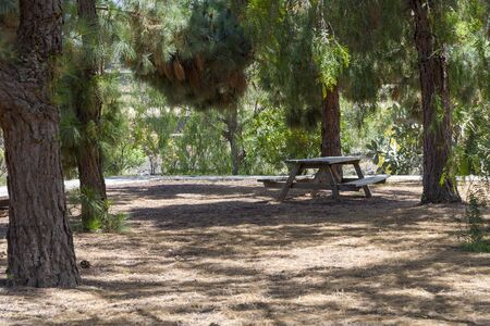 Bench near the trees in a picnic area. The concept of recreation and entertainment.