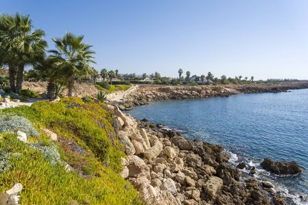 Palm trees on the rocky beach of Cyprus. The concept of Paradise and rest. Фото со стока