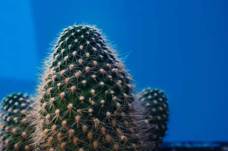 Hipster Cactus plant. space to place your logo