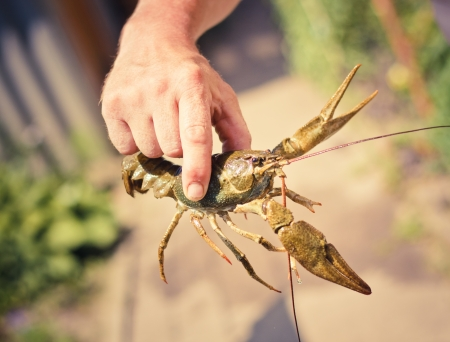 The crawfish in hand near the river.