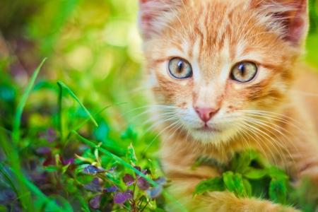 晴れた日に撮影屋外草で若い子ネコ 写真素材