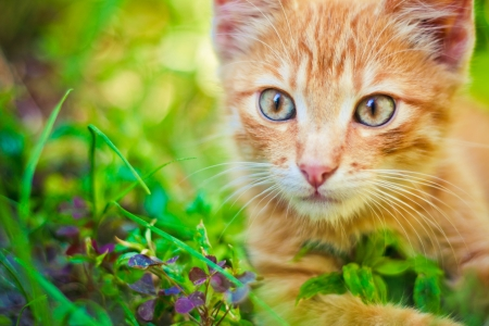 Young kitten in grass outdoor shot at sunny day photo