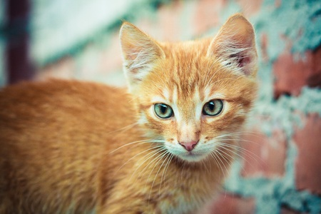 A red kitten sitting on a stone background. Stock Photo - 11500190