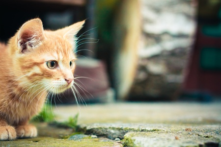 A red kitten sitting on a stone background.