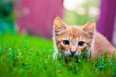 Jonge kitten in het gras buiten schot op zonnige dag