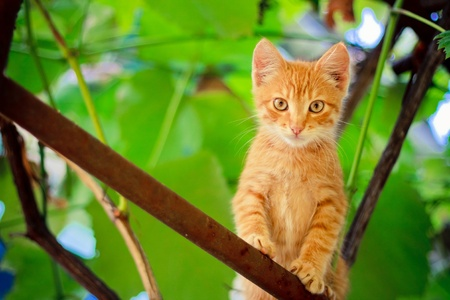 Young kitten sitting on branch outdoor shot at sunny day photo