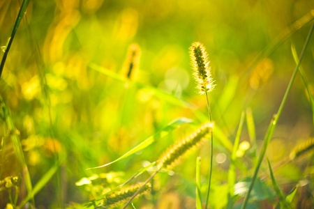 long grass meadow closeup with bright sunlight Stock Photo