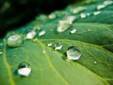 Water druppels op groene plant Stockfoto