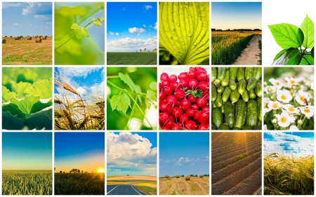 Agricultural set  Agriculture or harvest collage photo