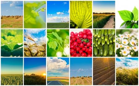 Landbouw set Landbouw of oogst collage