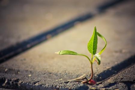 Jonge spruit maakt de weg door weg tegels
