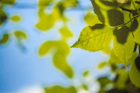 Spring Or Summer Green Leaves border