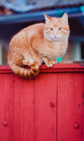 Cat is walking on a fence  Stock Photo - 16810983