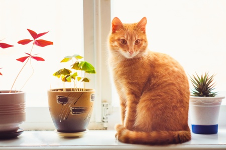 Res domestic cat sitting on a white window sill photo