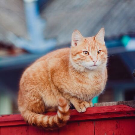 Cat is walking on a fence Stock Photo - 16920607