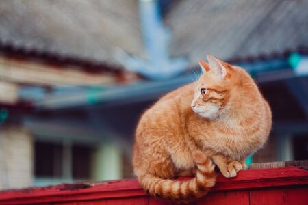 Cat is walking on a fence Stock Photo - 17041923