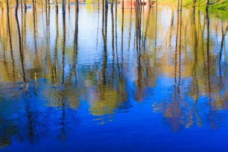 Rio e da floresta primavera. Composi