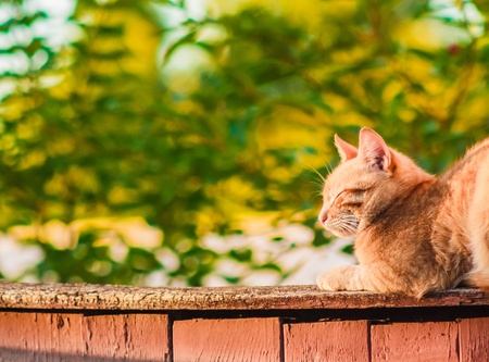 Red Cat Sitting And Sleeping On A Fence photo