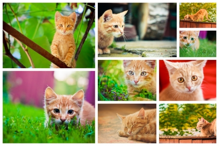 Peaceful orange red tabby male kitten  Set Collage Old House On The Countryside photo