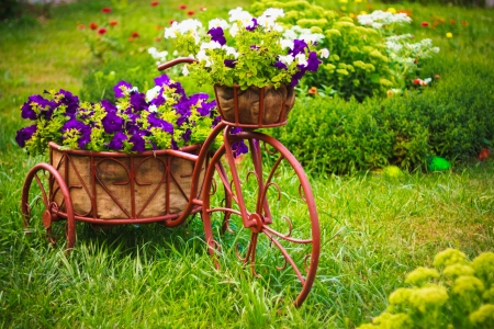 Decorative Model Of An Old Bicycle Equipped With Basket Of Flowers. photo