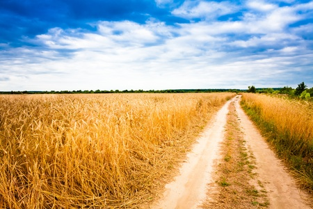 Road In Field With Ripe Wheat And Blue Sky With Clouds photo