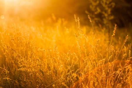 Summer Grass Meadow Close-Up With Bright Sunlight. Sunny Yellow Background photo