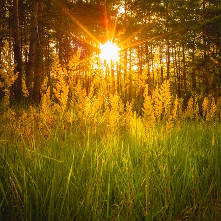 Sunlight In The Green Forest, Summer Time photo