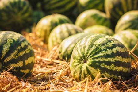 Heap of watermelons. Background