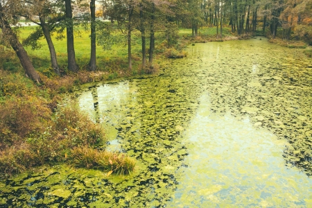 Wild Bog Swamp. Russian Nature In Autumn Stock Photo