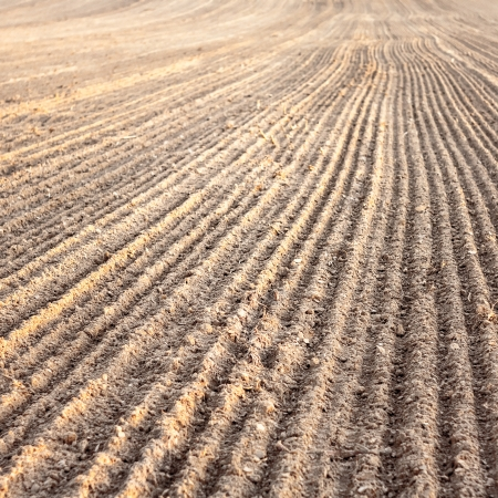 plough land: Background of newly plowed field ready for new crops. Ploughed field in autumn. Farm, agricultural background