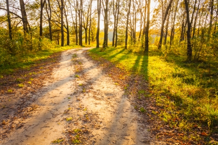 road and path through: Path road way pathway with trees on sunny day in autumn yellow forest. Sunbeams pour through trees in summer autumn forest. Russian nature