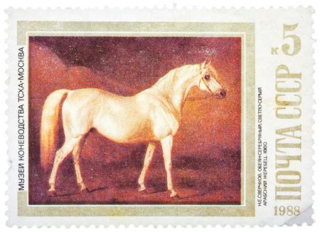 USSR - CIRCA 1988: A stamp printed in USSR shows painting Light Gray Arabian Stallion by Nikolai Sverchkov, series, circa 1988