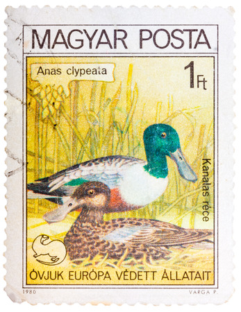 HUNGARY - CIRCA 1980: A stamp printed in HUNGARY shows a Northern Shoveler (Anas clypeata), from series birds nest, circa 1980