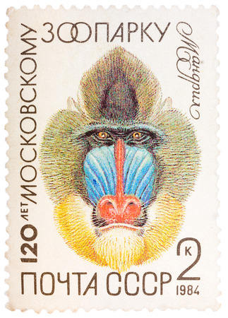 USSR - CIRCA 1984: The postal stamp printed in USSR shows a Mandrill, series 120 anniversary of the Moscow Zoo, circa 1984