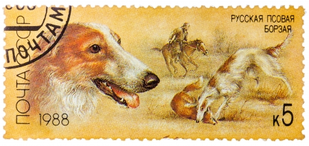 RUSSIA - CIRCA 1988: stamp printed by Russia, shows dog, hound, hunting, circa 1988 Stock Photo - 25540860