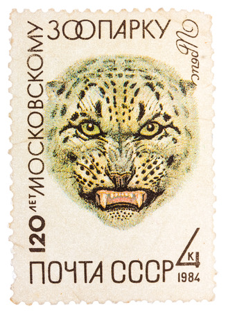 RUSSIA - CIRCA 1984: A stamp printed in Russia, shows Snow leopard in Moscow Zoo, 120th Annivarsery series, circa 1984.