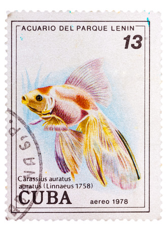 CUBA - CIRCA 1978: A postage stamp printed in the Cuba shows carassius auratus auratus - asian goldfish, circa 1978