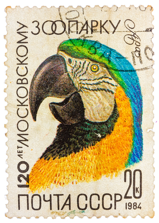 USSR - CIRCA 1984: A stamp printed by Russia showing parrot, 120-th anniversary of the Moscow Zoo, circa 1984