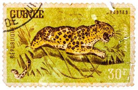 postes: GUINEA - CIRCA 1960: A stamp printed in Guinea from the Wild Animals issue shows a Leopard (Panthera pardus), circa 1960.