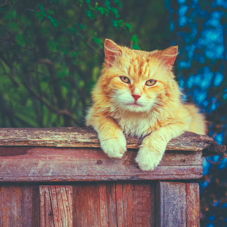 Red Cat Sitting On Fence And Looking At Camera. Instant photo