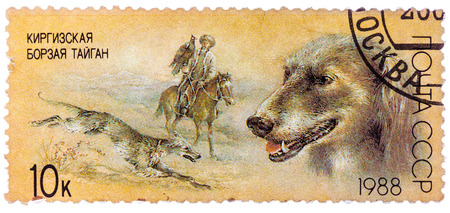 USSR - CIRCA 1988: A stamp printed in USSR, shows Kirghiz greyhound, falconry, series Hunting dogs, circa 1988