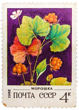chicouté: RUSSIE - CIRCA 1982: timbre poste imprimé en URSS (CCCP, l'union soviétique) montre l'image de la chicouté, Scott catalogue 5023 A2395 4k orange rouge blanc noir vert, circa 1982