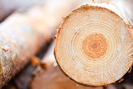 Jaarlijkse ringen op gezaagd grenen hout hout textuur