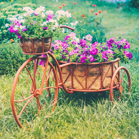 petunias: Decorative Model Of An Old Bicycle Equipped With Basket Of Flowers. Toned instant photo Stock Photo