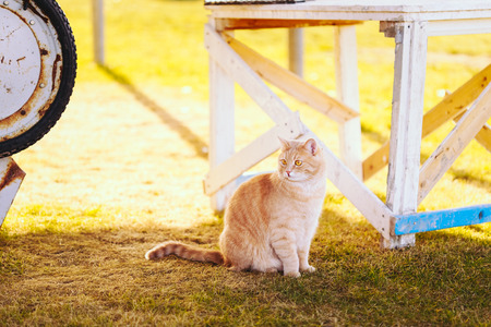 Red cat sitting on green spring grass. Outdoor summer day portrait